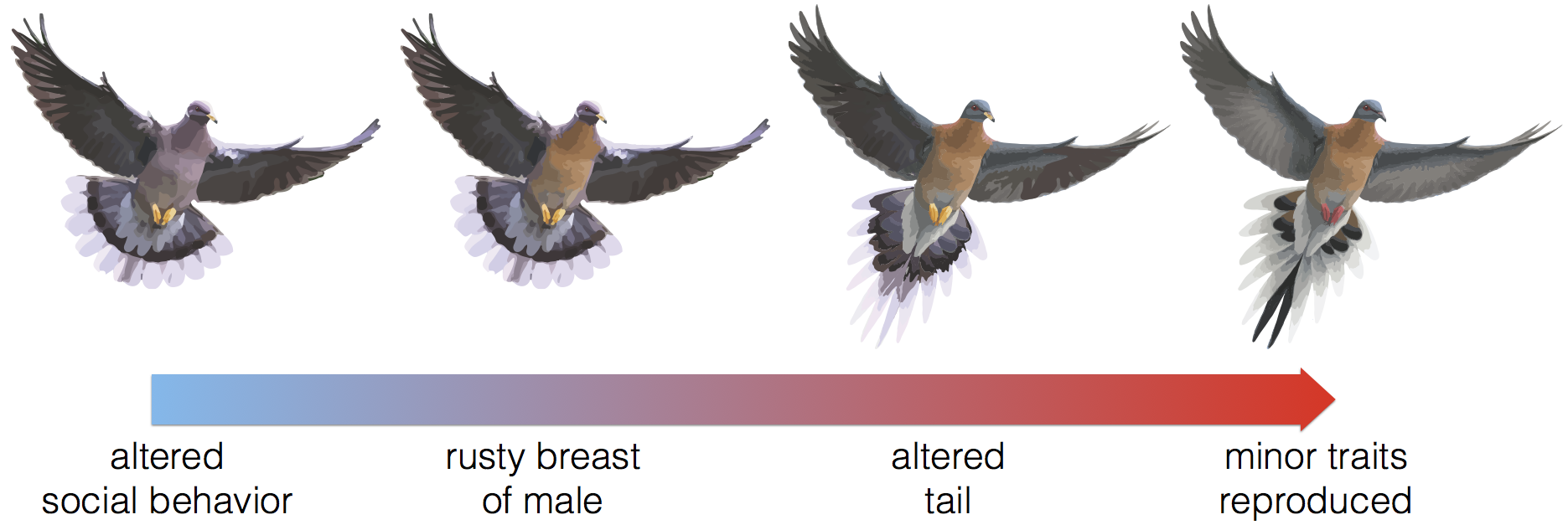 Passenger Pigeon images used in this diagram were modified from Tim Hough's original artwork